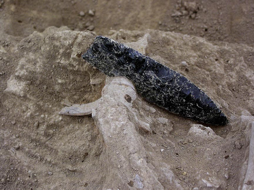 An obsidian point is embedded in prehistoric human remains from a burial in central California.