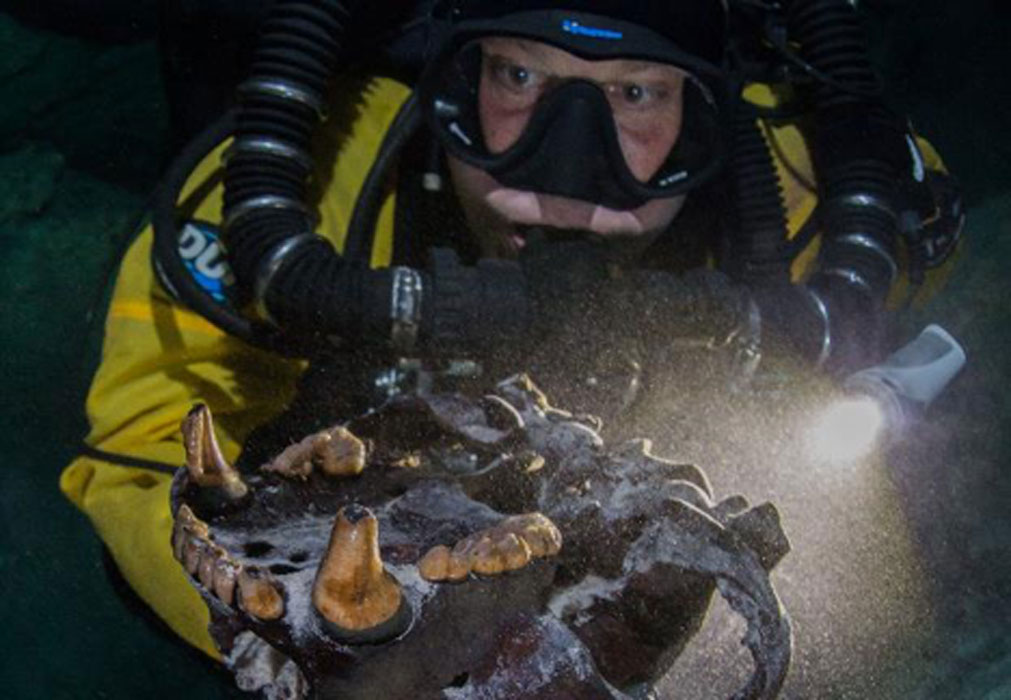 """A diver holds the skull of an ancient bear known as an Arctotherium. It is one of the species of """"prehistoric monsters"""" found in an underwater Yucatan cave."""