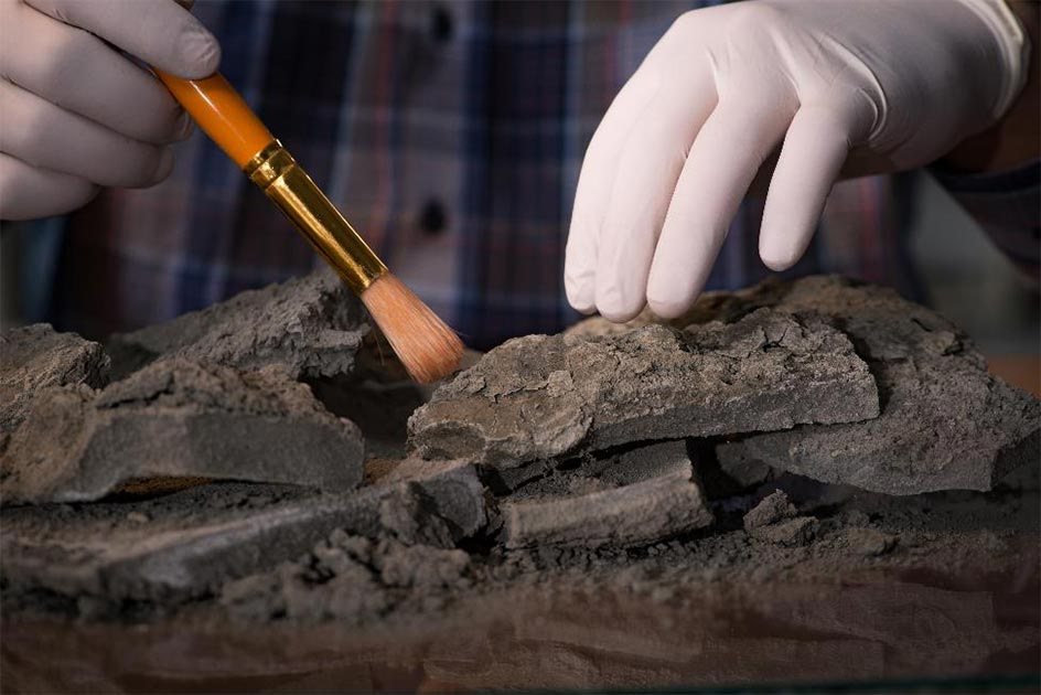 Radiocarbon dating needs fine-tuning if scientists and archaeologists want a more accurate historical timeline. Source: Elnur /Adobe Stock