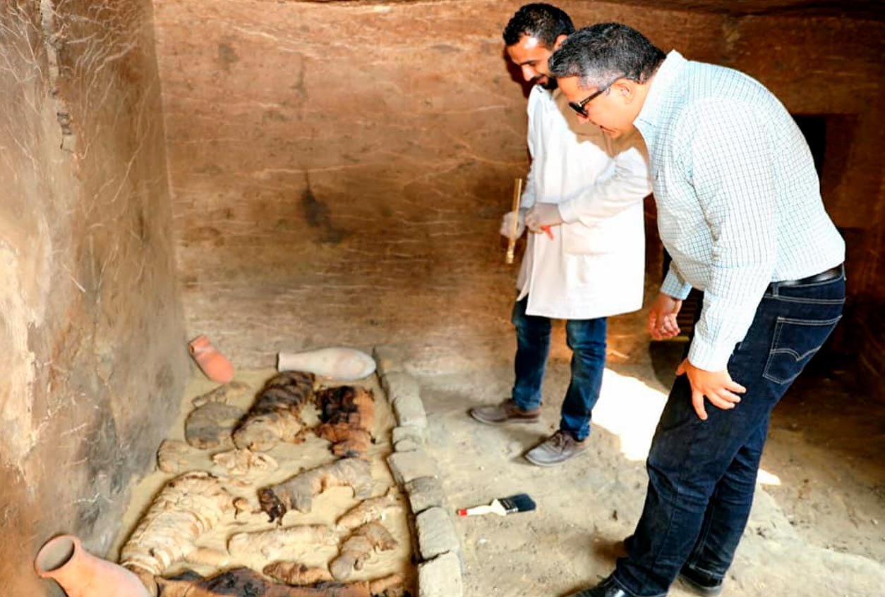 The remains of a sarcophagus containing mummified cats. Credit: Ministry of Antiquities