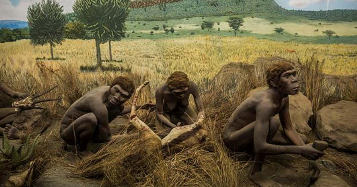 Early hominids processing game with stone tools. Diorama at the Nairobi National Museum.