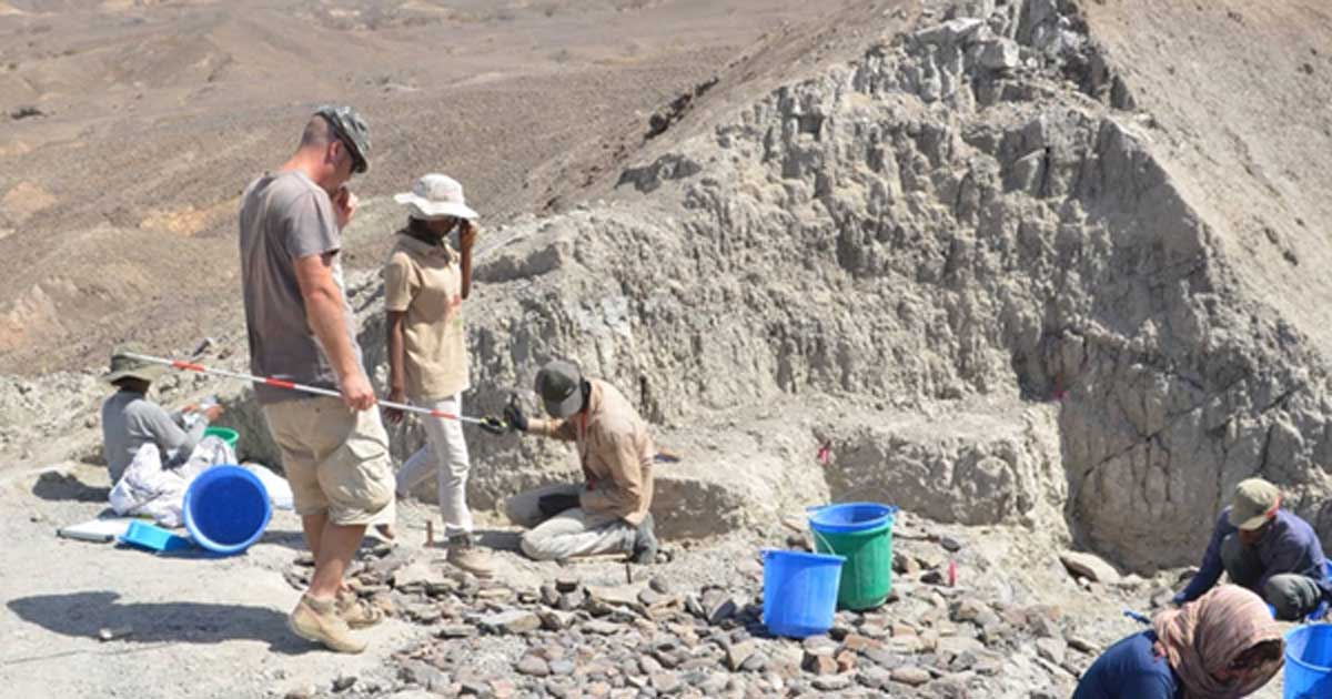 Researchers found the collection of 'Oldowan' flaked stone tools in the Afar region of north-eastern Ethiopia. Source: Erin DiMaggio.