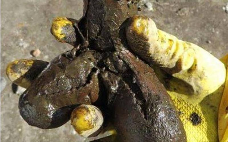 The 18th century sex toy unearthed in the Polish latrine. Credit: Regional Office for the Protection of Monuments.