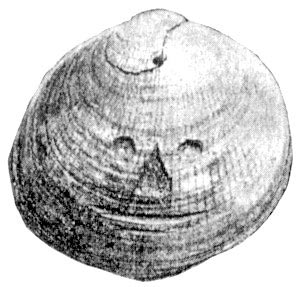 Fossilized shell found by H. Slopes