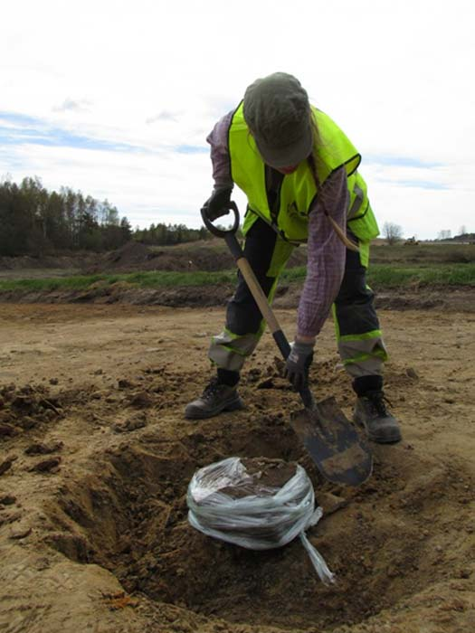 Lina Håkansdotter gently shovels down into the mud to uncover the pot found near the 82 pits in Sunnsvära, Sweden. The plastic prevents the pot from falling apart.