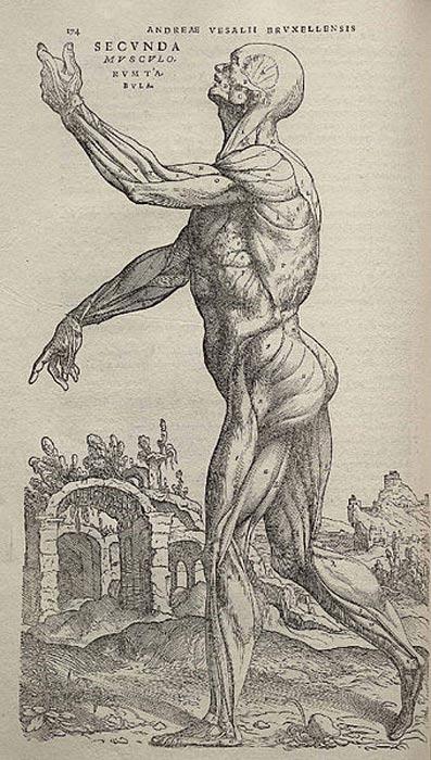 One of Vesalius' drawings of human anatomy.