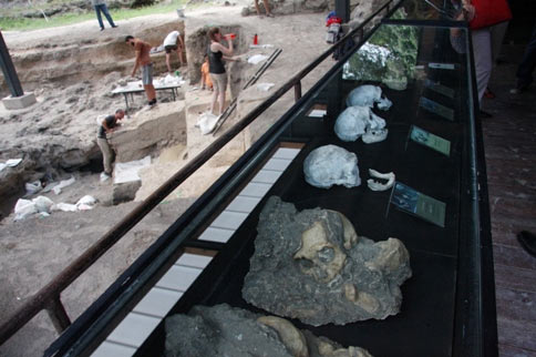 Early human skulls found in Dmanisi