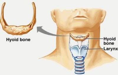 Location of the Hyoid bone