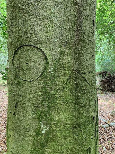 A witch mark carved into one of the trees. (New Forest National Park)