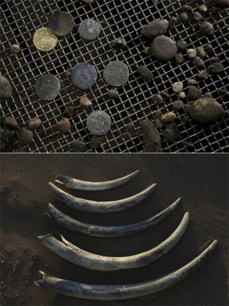 Treasures from the Bom Jesus shipwreck. Top: gold 10-cruzado coins (cross insignia), minted under the reign of King João III of Portugal in 1525 and withdrawn in the 1530s, helped to date and identify the ship. Bottom: the shipwreck cargo included more than 100 unworked elephant tusks. (Amy Toensing; National Geographic Image Collection license)
