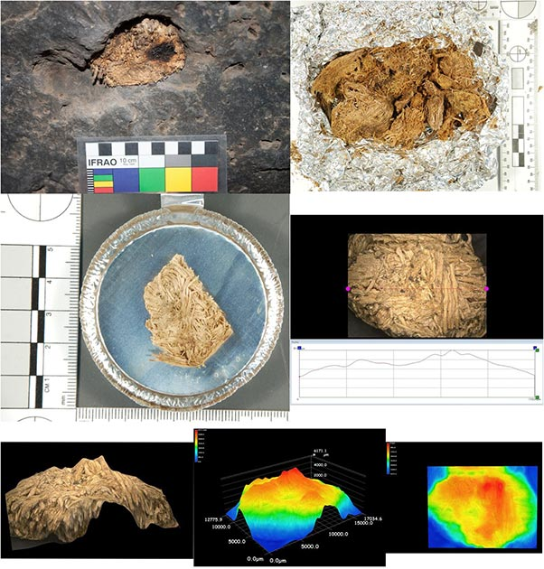 Archaeologists recovered artifacts including arrowheads, tools, and food scraps at the Pinwheel Cave, alongside chewed remnants of quids (plant materials) in the cracks of the cave ceiling. Analysis of these quids confirmed they contain sacred datura. (Robinson et. al / PNAS)