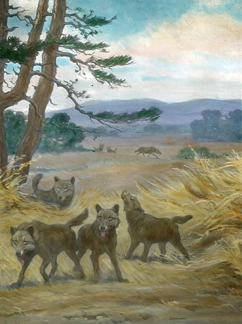 """""""Dire wolves are sometimes portrayed as mythical creatures […] but reality turns out to be even more interesting."""" (Public Domain)"""