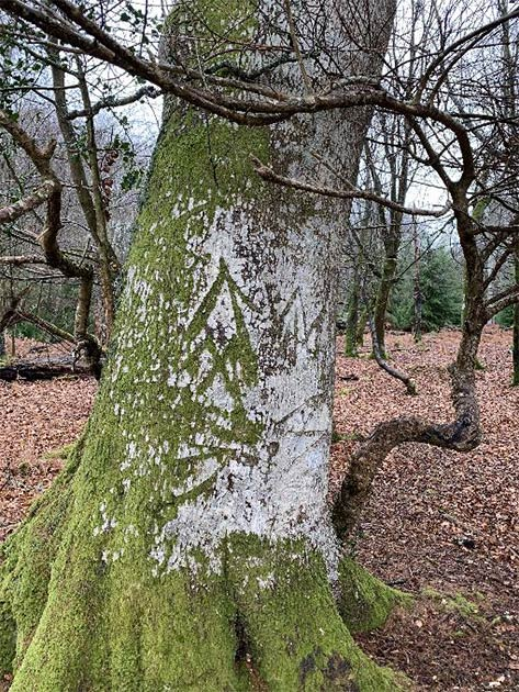 King's mark on one of the trees in New Forest, Hampshire, England. (New Forest National Park)