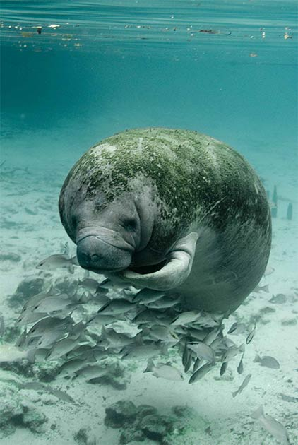 The find of Sirenia fossils, of a species related to the modern-day sea cow, dating back millions of years supports the idea that the eastern deserts of Egypt were once a shallow marine environment. (Public domain)