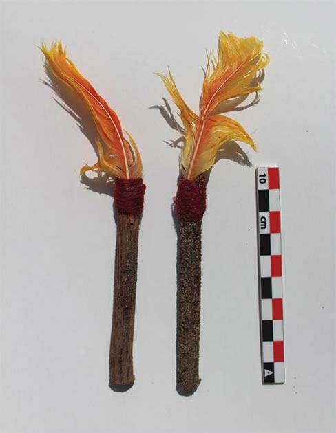 Orange feathers of tropical birds had been tied to one end of a wooden stick and placed as decorations for white llama sacrifices. (L.M. Valdez /Antiquity Publications Ltd)