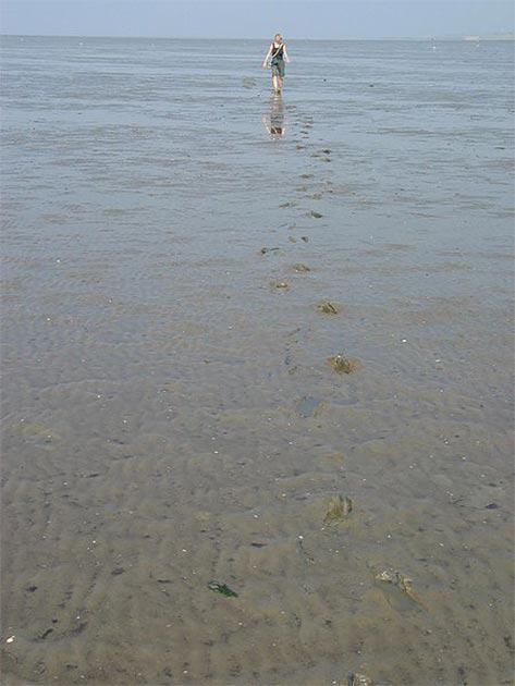 Mudflat hiking, Wadden Sea near Wilhelmshaven. (Daniel Schwen/CC BY SA 2.5)