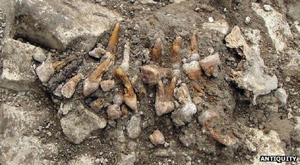 The teeth in position during the excavation. The iron pin is visible on the left.