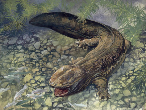The Japanese Giant Salamander