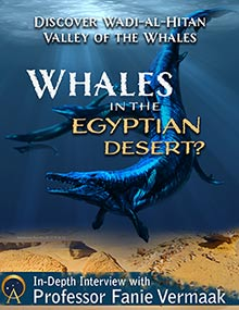 Whales in the Egyptian Desert