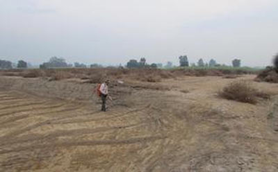 The newly discovered mound situated to the west of Rakhigarhi