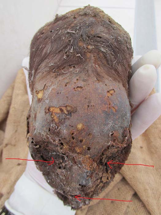 The mummified elongated head of a newborn from Peru. Arrows point to the eye sockets and the mouth.