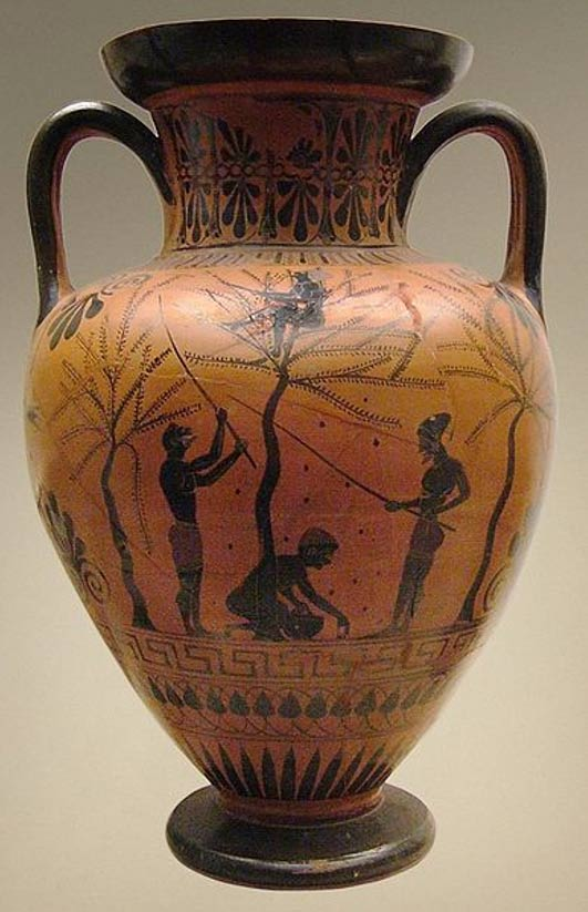 Scene of olive-gathering by young people. Attic black-figured neck-amphora, ca. 520 BC. From Vulci, Italy.