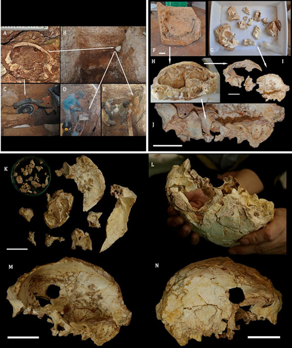 Various stages during the in-situ extraction and restoration process of the fossil, and reconstruction of the Aroeira 3 cranium after cleaning.
