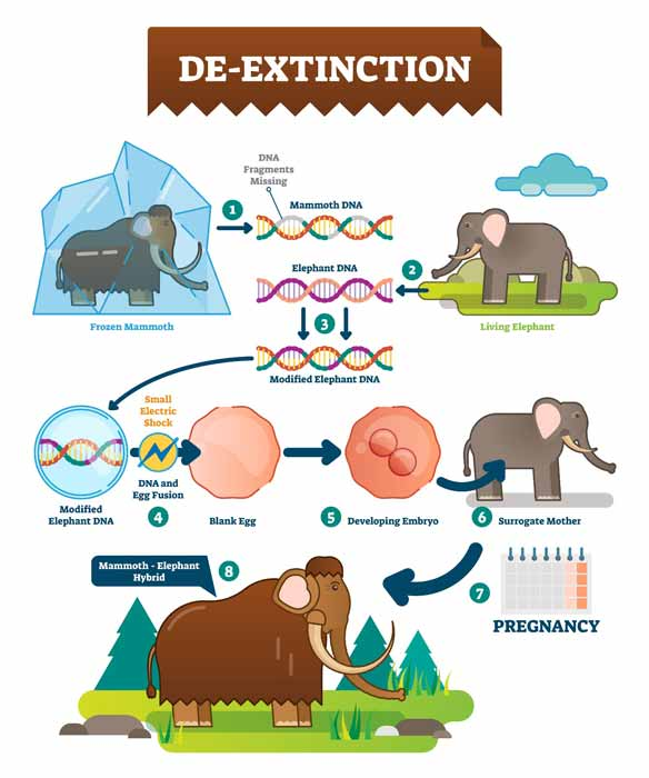 The process of making a woolly mammoth hybrid or, better said, a mammoth-elephant hybrid. (VectorMine / Adobe Stock)