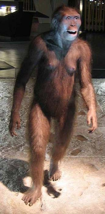 A reconstruction of a female A. afarensis.