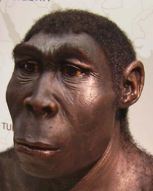 A reconstruction of a male Homo erectus. (W. Schnaubelt & N. Kieser/CC BY SA 2.5)