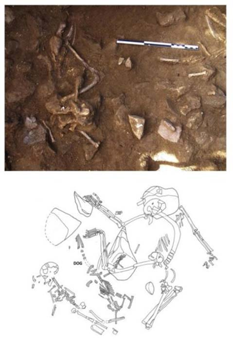 Top: remains of adult dog in partial anatomical connection in La Serreta. Bottom: dog in anatomical connection between human skeletons, in the necropolis Bòbila Madurell.