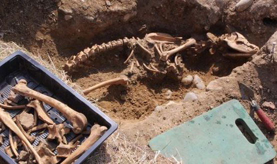 The remains of the huge dog found in Leiston Abbey