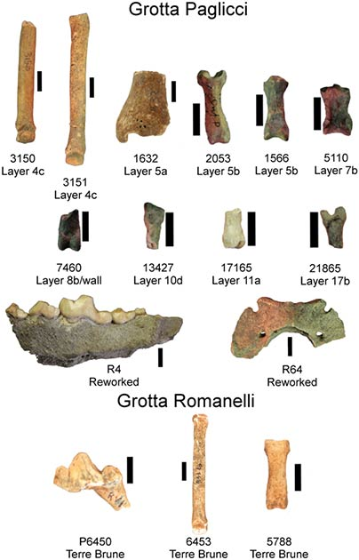 Some of the canine remains found in the Romanelli Cave (University of Siena)