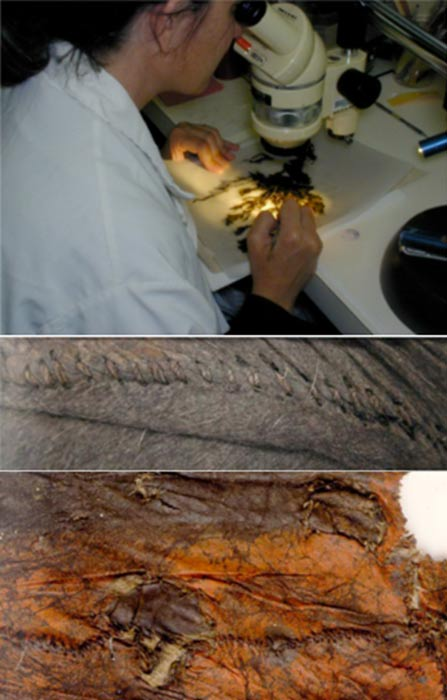 Images of the robe analysis: A conservator looking at the construction details and for botanical remains in the fur. (top) Detail of the robe stitching. (middle) Skin side of the robe showing ochre. (bottom)