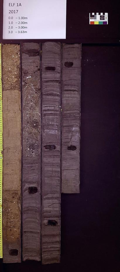 The sediment of which the sedaDNA was studied