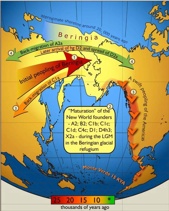 Genetic settlement of Beringia