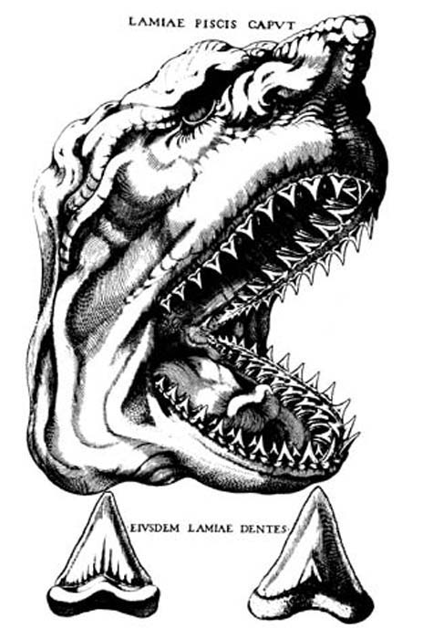 The depiction of a shark's head by Nicolaus Steno in his work The Head of a Shark Dissected.