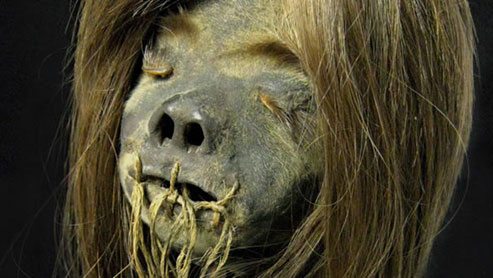 A shrunken head of the Jivaro culture