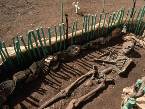 Skeletal remains being dug up at La Isabela