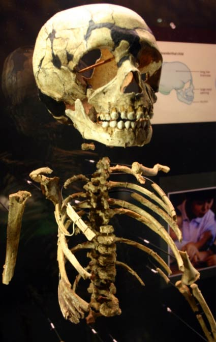 50 000 Year Old Skull May Show Human Neanderthal Hybrids