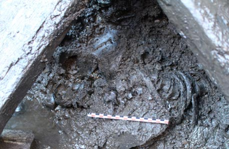 Skeletal remains found in Sverresborg, Norway