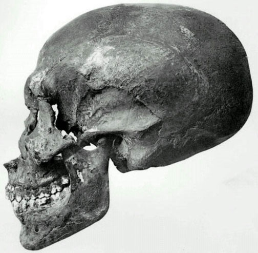 Profile view of the skull recovered from KV55.