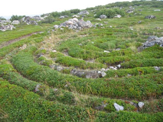 One of the stone labyrinths on Bolshoi Zayatsky Island