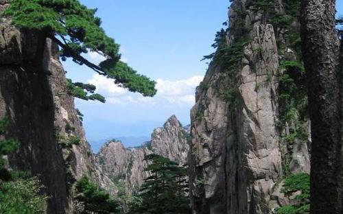 Huangshan pines (CC BY-SA 3.0)