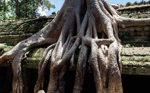 Roots of a spung running along the gallery of the second enclosure. (CC BY-SA 3.0)
