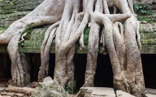 Ta Phrom, Angkor, Cambodia (CC BY-SA 3.0)