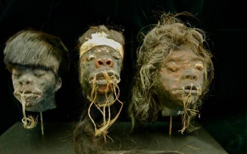 Shrunken Heads at the San Diego Museum of Man (Image: www.museumofman.org)