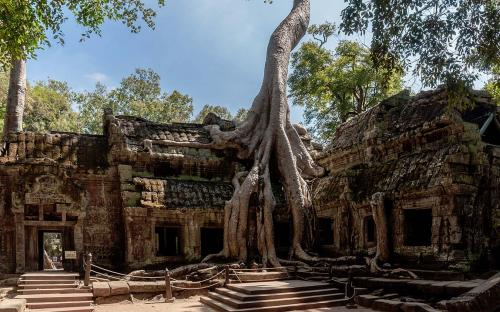 Spung on a temple in Ta Prohm (CC BY-SA 3.0)
