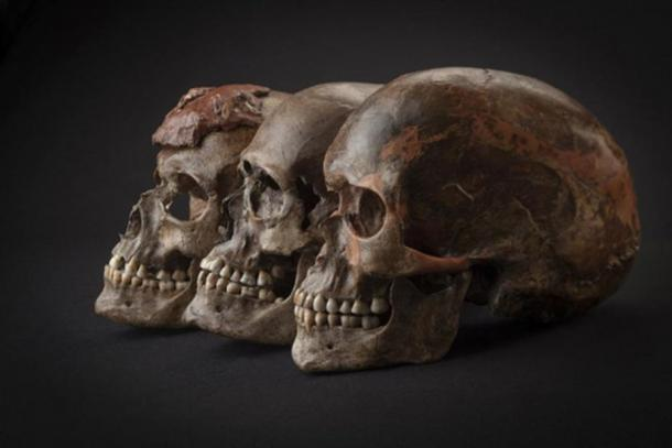 Three ~31,000-year-old skulls from Dolni Vestonice in the Czech Republic. For the next five thousand years, all samples analyzed in this study -- whether from Belgium, the Czech Republic, Austria, or Italy -- are closely related, reflecting a population expansion associated with the Gravettian archaeological culture.