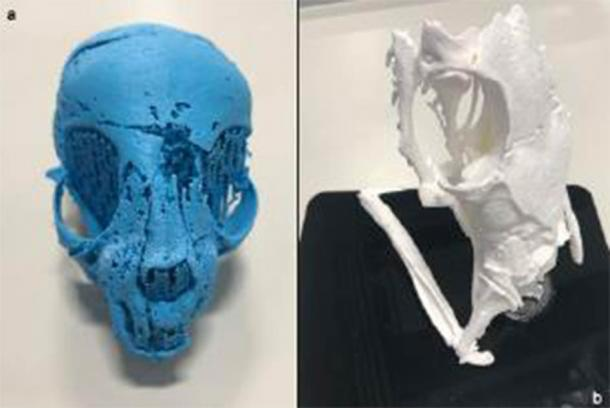 3D-prints from segmented X-ray micro tomography data of the mummified cat. (Nature)